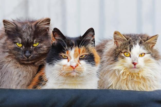 Trzy bezpańskie koty wygrzewają się w ciepłych ubraniach na ulicy