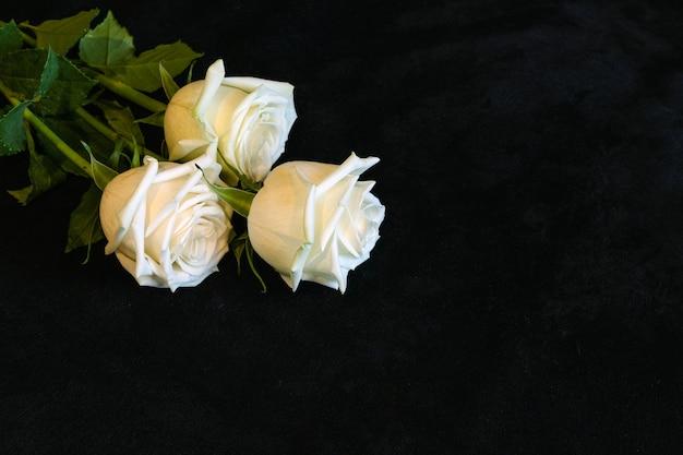 Trzy białe róże na czarnym aksamitnym materiale z kopią spase