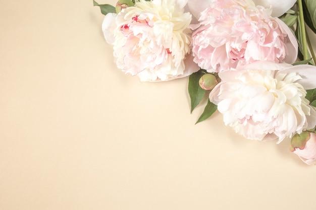 Trzy duże beżowo-różowe kwiaty piwonii na jasnym tle papieru z miejscem na tekst