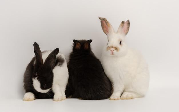 Trzy działania trzech małych królików. urocza akcja uroczego królika