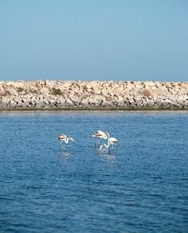 Trzy flamingi nad morzem śródziemnym w tunezji.