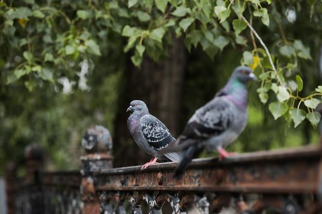 Trzy gołębie siedzą na płocie - park przy zielonym drzewie.