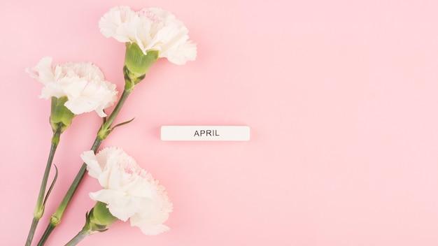 Trzy goździki na różowym tle, napis april