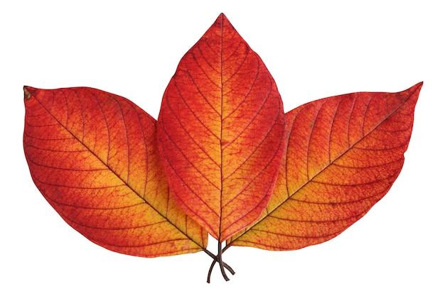 Trzy jesienne liście na białym tle na białej powierzchni