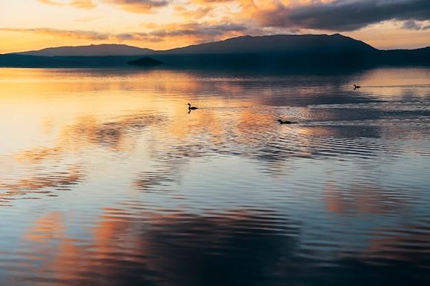 Trzy kaczki pływające w jeziorze o zachodzie słońca, gdy słońce zachodzi na horyzoncie