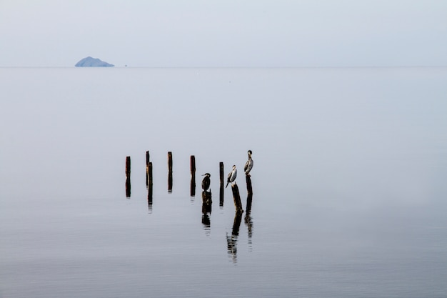Trzy kormorany na słupach, które wychodzą z płaskiej wody, cierpliwie czekają na złapanie ryby