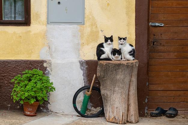 Trzy koty siedzą na drewnianym pniu w pobliżu ściany