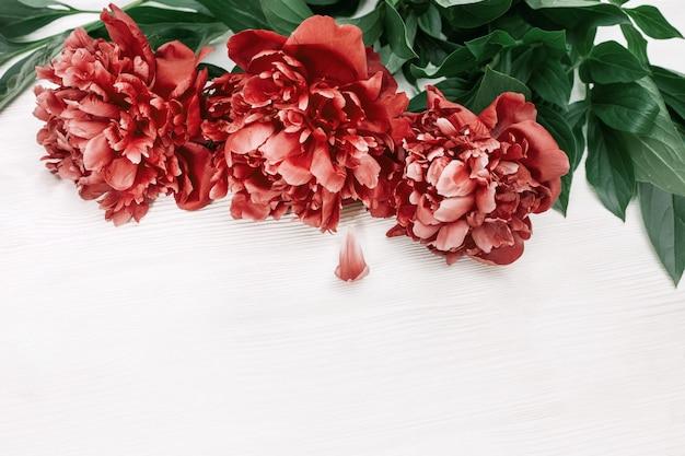 Trzy kwitnące kwiaty piwonii. czerwone peonie na białym drewnianym tle z kopii przestrzenią. widok z góry. leżał płasko.