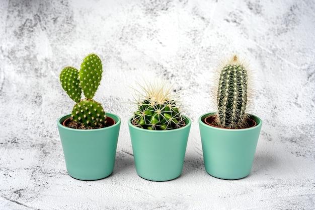 Trzy małe kaktusy stoją w rzędzie na kamiennym stole