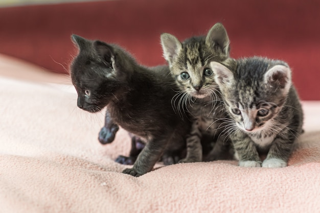 Trzy małe kocięta bawią się na łóżku