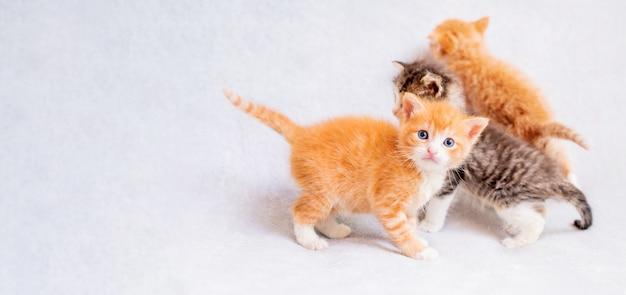 Trzy małe zabawne kocięta, dwa rude i jeden szary na tle lekkiej miękkiej kratki. ruda patrzy w kadr, pozostała dwójka ucieka.