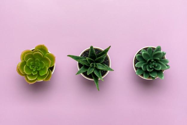Trzy mini sukulenty w doniczce na fioletowym tle widok z góry płaski lay
