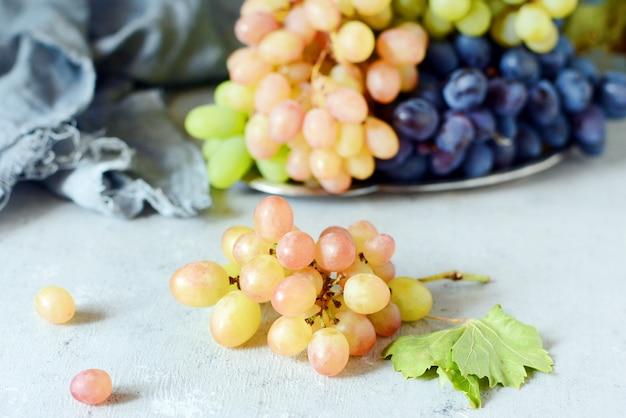Trzy odmiany świeżych dojrzałych winogron na szarym tle. żniwa. świeże letnie owoce. deser słodkich owoców.