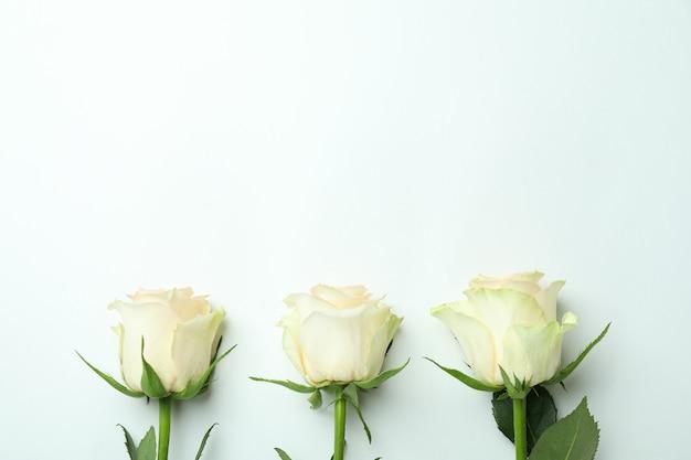 Trzy piękne róże na białym tle, miejsce na tekst