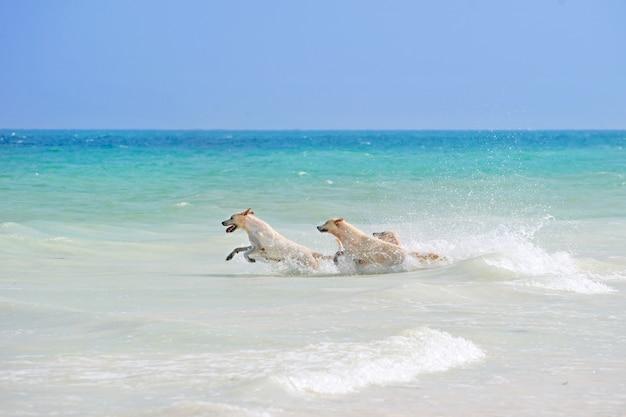 Trzy psy bawiące się