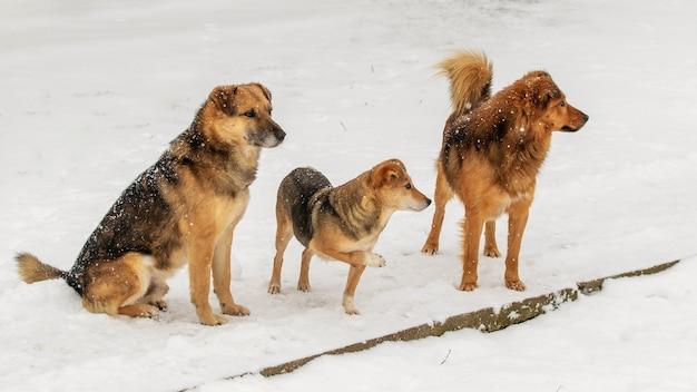 Trzy psy w zimie na śniegu. ciekawe zwierzęta