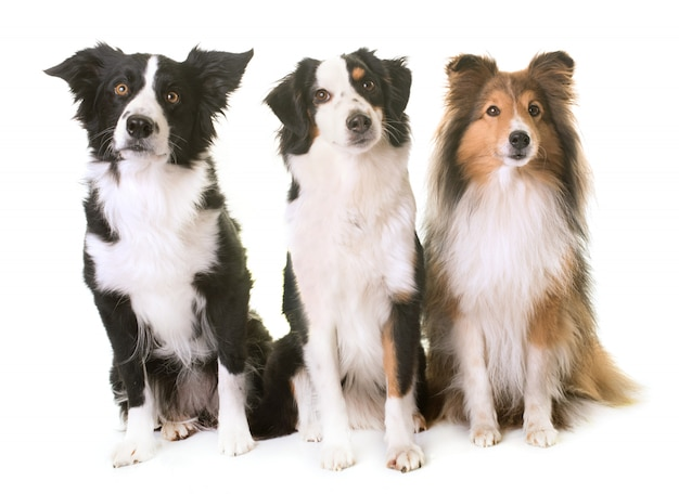Trzy psy
