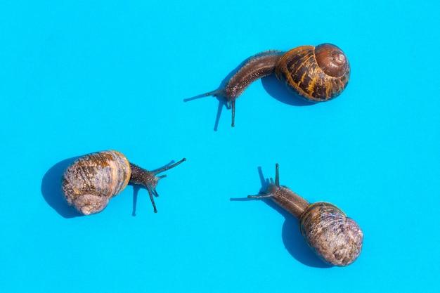 Trzy ślimaki czołgają się na pastelowym niebieskim tle w trójkącie