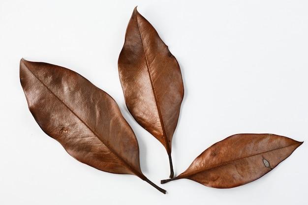 Trzy suchego liścia na białym tle