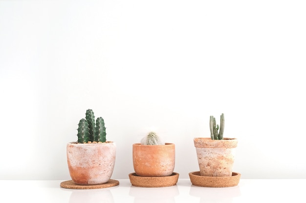 Trzy sukulenty lub kaktus w glinianych garnkach nad białym tłem na półce