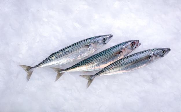 Trzy świeże makrele w lodzie w sklepie rybnym
