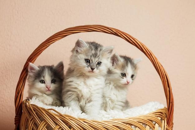Trzy szare kociaki w koszyku z ponad różową ścianą