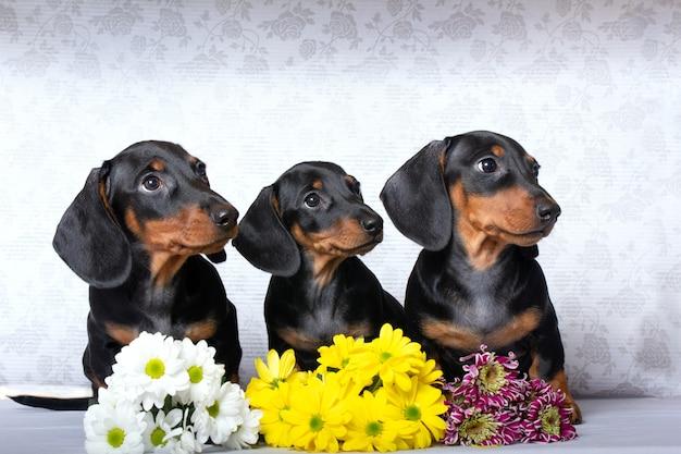 Trzy szczeniaki jamnika z kwiatami
