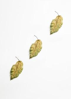 Trzy ukośnie ułożone suche liście