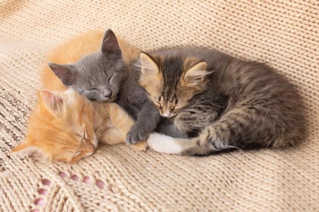 Trzy urocze kocięta pręgowane na kocu z dzianiny. zwierzę domowe.
