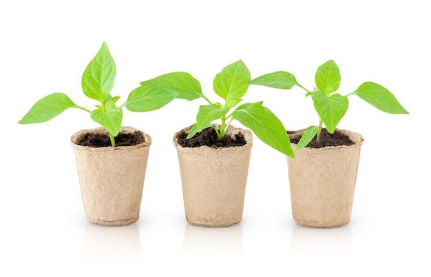 Trzy zielone sadzonki doniczkowe na białym tle