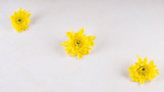 Trzy żółte kwiaty na stole