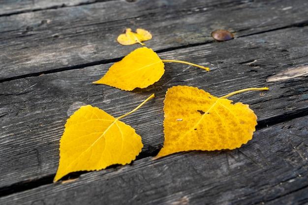 Trzy żółte liście na stole jesienią w alcoi.