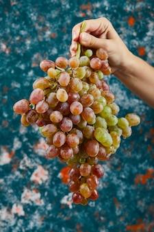 Trzyma kilka czerwonych winogron na niebieskim tle. wysokiej jakości zdjęcie