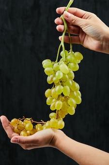 Trzyma kilka świeżych białych winogron na czarnym tle. wysokiej jakości zdjęcie