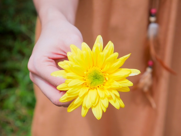 Trzyma piękny żółty kwiat chryzantemy w dłoni