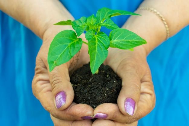 Trzymaj sadzonki roślin przed sadzeniem w rękach kobiet