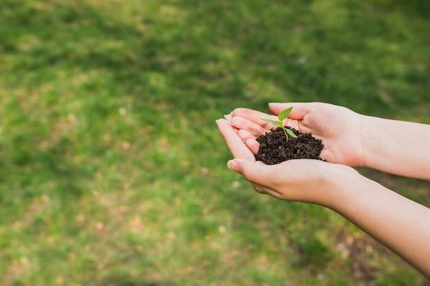 Trzymając się za ręce małą roślinę