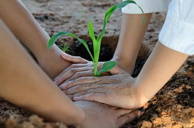 Trzymając się za ręce młodych roślin