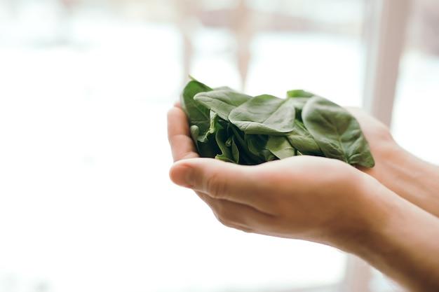 Trzymając się za ręce świeże sałatki zielone liście szpinaku. koncepcja zdrowego wegetariańskiego jedzenia. zielone liście szpinaku. dary natury. błogosławione żniwa.