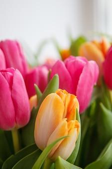 Tulipan. piękny bukiet tulipanów. kolorowe tulipany.