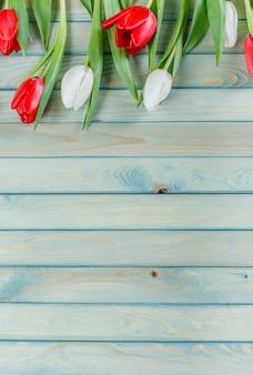 Tulipan wiosenne kwiaty