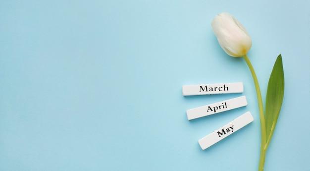 Tulipan z etykietami miesięcy wiosennych