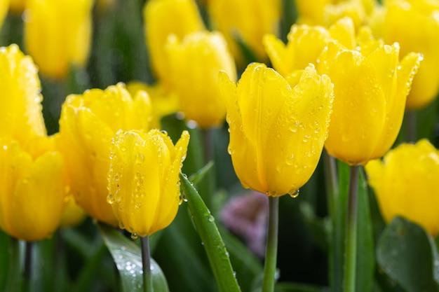 Tulipanowy kwiat z zielonym liściem