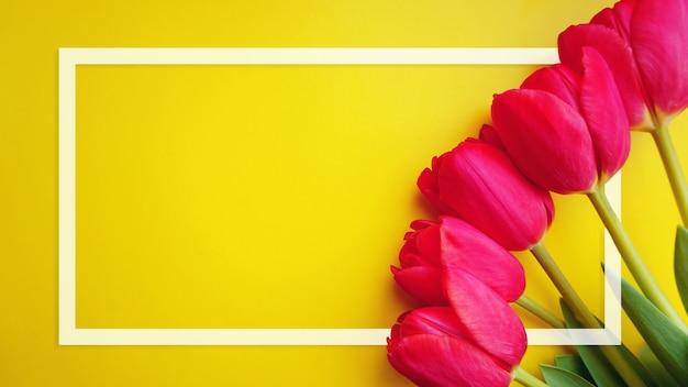 Tulipany kwiaty ramki. karta kwiatowa. różowe tulipany i biała ramka na żółtym tle. dzień matki. międzynarodowy dzień kobiet. widok z góry, kopia miejsca