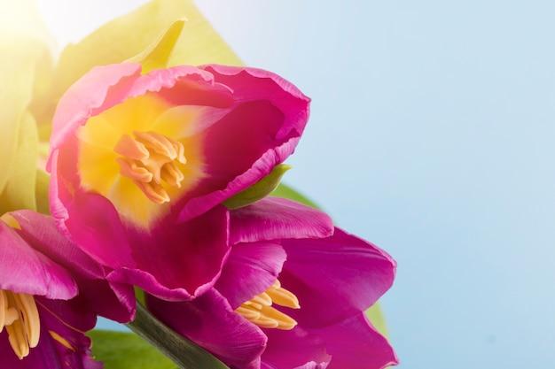 Tulipany na zewnątrz