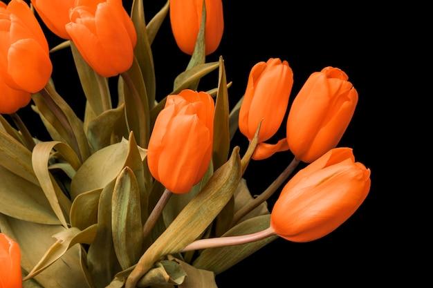 Tulipany z pomarańczowymi pąkami są izolowane na czarnym tle. bukiet kwiatów jest piękny. zdjęcie wysokiej jakości