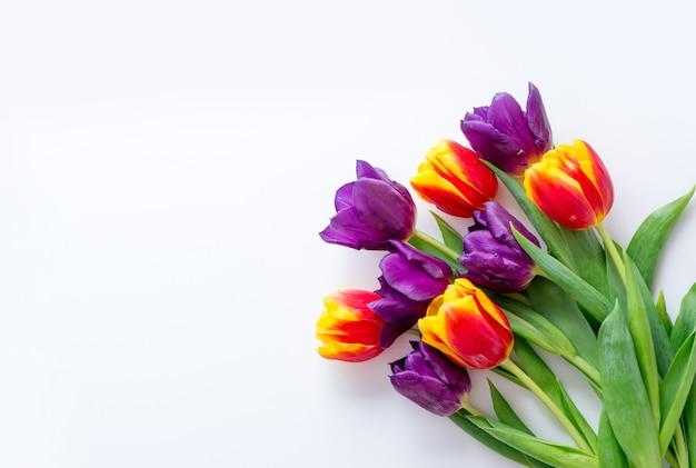 Tulipany żółte czerwone fioletowe na białym tle. rama dla karty z pozdrowieniami z miejscem na tekst