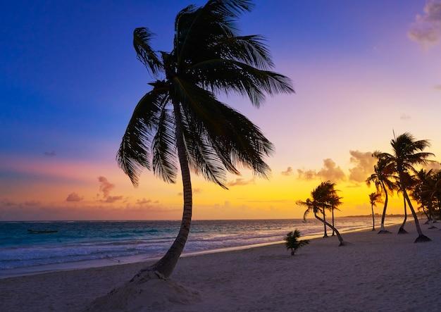 Tulum plaży zmierzchu drzewka palmowego riviera majowie