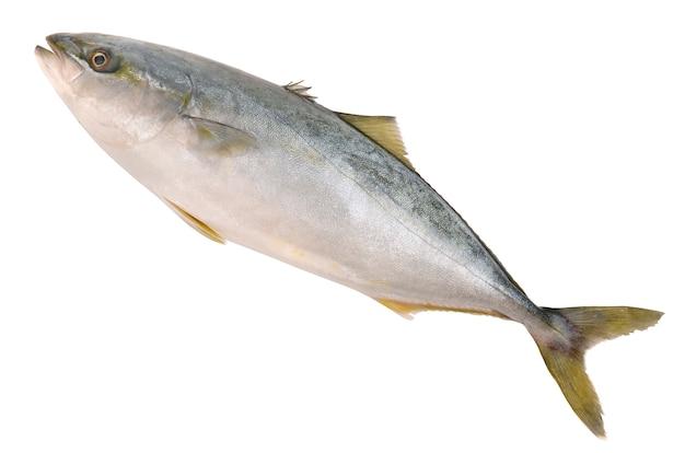 Tuńczyk na białym tle
