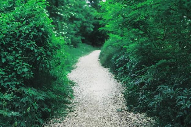 Tunel ze ścieżką przez puszyste rośliny do lasu.